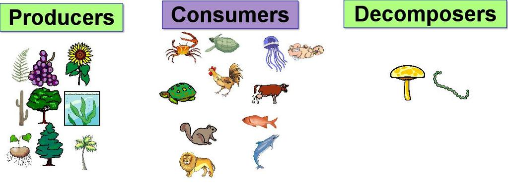 How are food chains alike? There are also decomposers. Decomposers break down dead or decaying plant and animal material.