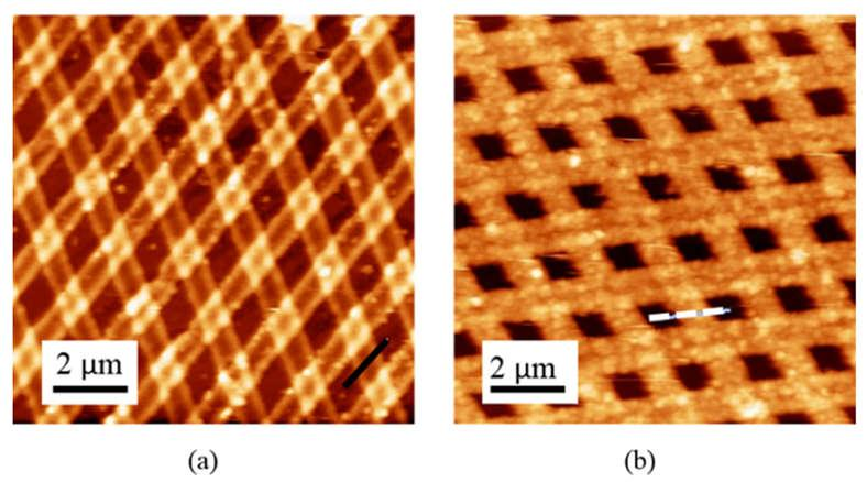 AFM Data: Physical Dimensions Atomic force microscope images of copper-coated PVP grid before the reaction with silver nitrate/sodium citrate solution (a) and after the reaction (b).
