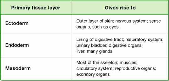 Origins of Animal Tissues and Organs Body Structure Patterns of symmetry Symmetry is a body arrangement in which parts that lie on opposite sides of an axis are identical.