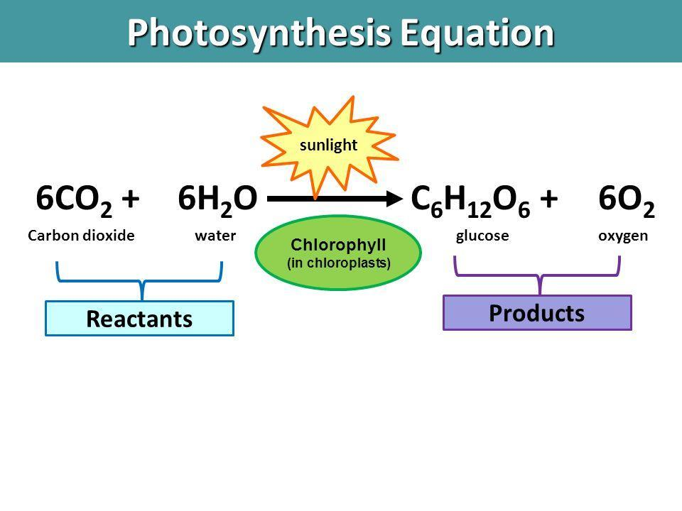 PHOTOSYNTHESIS The molecules used (reactants) during photosynthesis include: Carbon Dioxide (CO