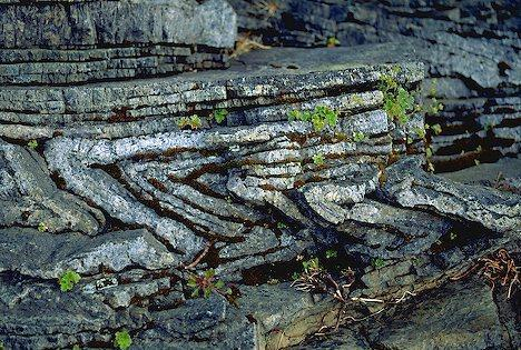 Sedimentary Rocks Sedimentary rocks form from rock and