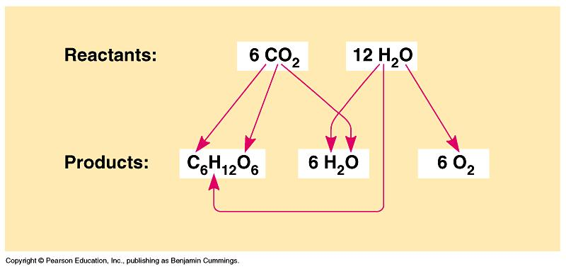 Photosynthesis is a redox reaction. It reverses the direction of electron flow in respiration.