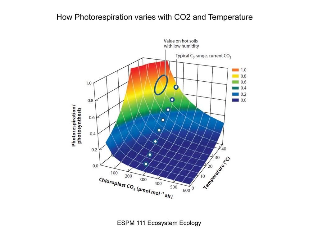 Graphic showing how photorespiration Increases with