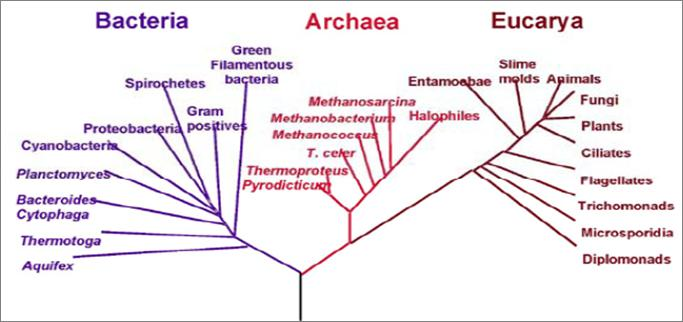 Phylogenetic Tree of Life Viruses Non-living particles