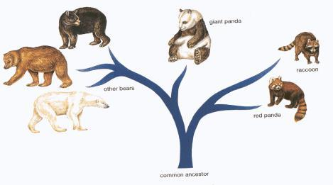 Phylogeny The evolutionary history of an organism or groups of organisms the cornerstone of a branch of biology called systematic taxonomy.