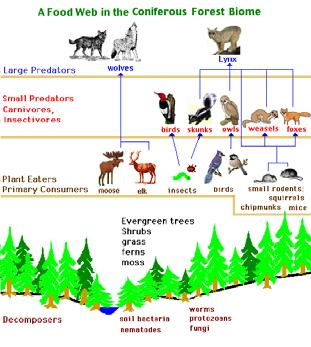 edu Lecture 7 Our Sun Ecology How organisms interact with each other and their physical environment.