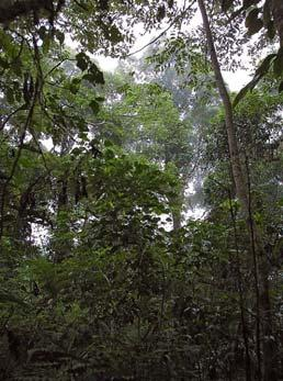 Canopy layer Understory Biomes Heavily modified by human activity