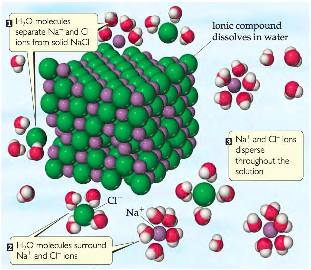 Ionic Compounds in Water Example: Solid NaCl consists of Na + and Cl ions.