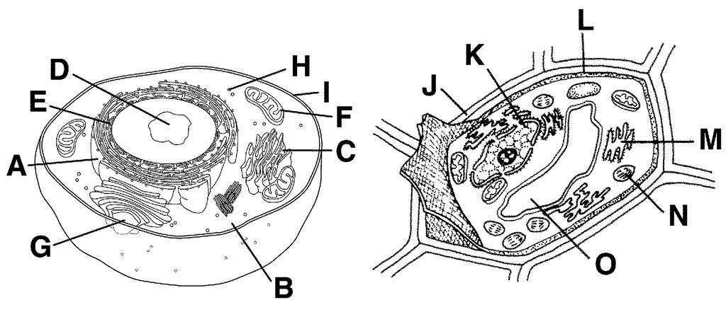 The Parts of a Cell (Organelles) Label the organelles of a plant and animal cell below: 1.