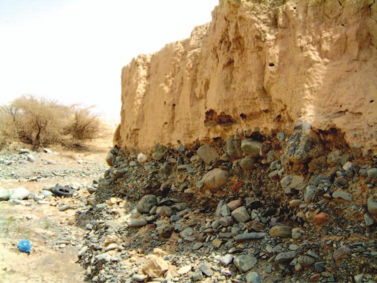 162 Saudi Arabia: An Environmental Overview Figure 6.29 Loessic alluvial silts in the Muhail basin derived from the stripping of deeply weathered saprolites.