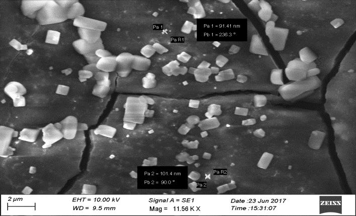 Scanning Electron Microscope Fig.3.SEM image of silver nanoparticle synthesized from 0.