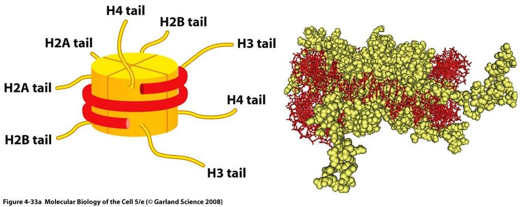 Chromatin structure in