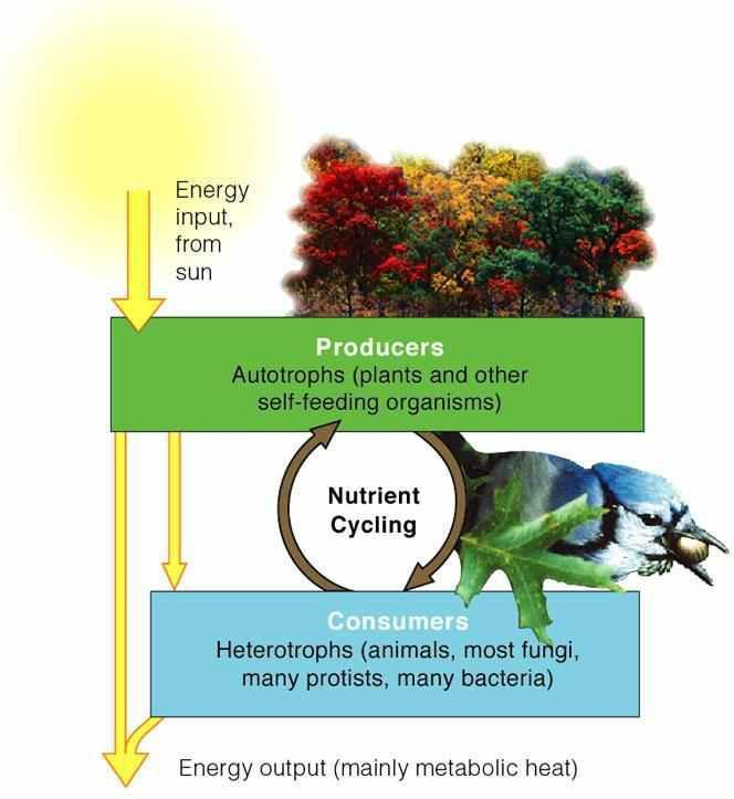 Energy Flow & Nutrient Cycling in Biological Systems