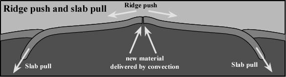 Here s a link to an animation showing how convection might drive plate tectonics.