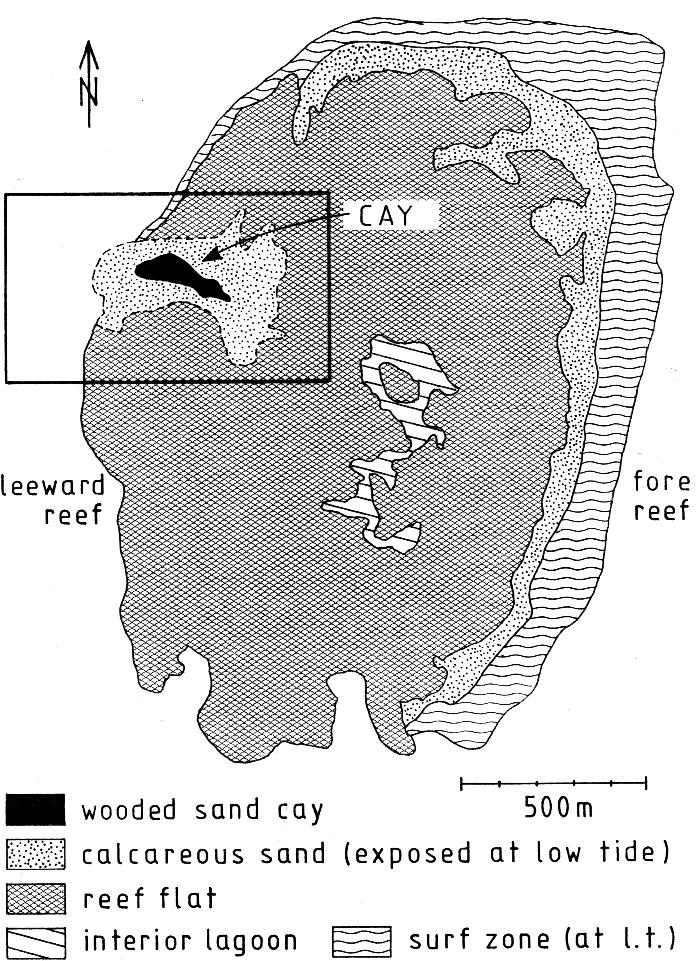 page 276 Fig. 2. Map of the Maziwi reef based on the 1975 aerial photograph. Fig. 3.