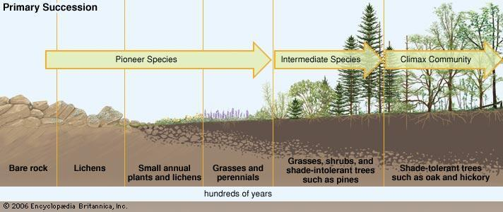 Primary succession- when species begin to inhabit a place where life has not existed before Examples: The edge of an