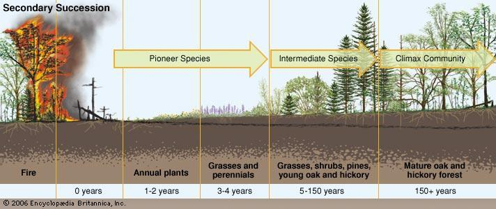 Secondary succession- when species take over areas that have had previous growth Examples: A forest
