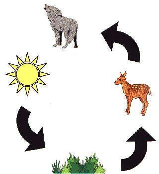 Energy Flow in Ecosystems The flow of energy is the most important factor that