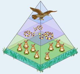 Energy Flow in Ecosystems Trophic levels In an ecosystem,