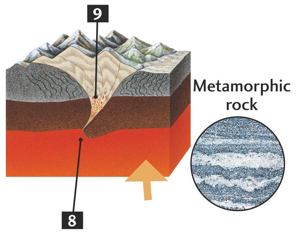 (e) The Rock Cycle Deformation & Metamorphism -Continental collision