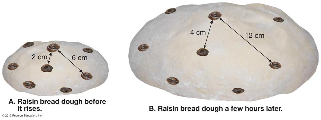 Raisin Bread Analogy of an Expanding Universe As the dough rises, raisins