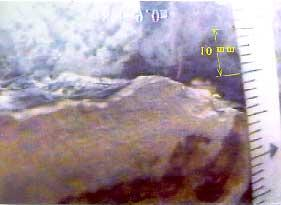 Silty clay Thicker line denotes more serious damage Figure : Summary of pile damage obtained from inspection by CCD camera possible to estimate the size by making comparisons with the size of the