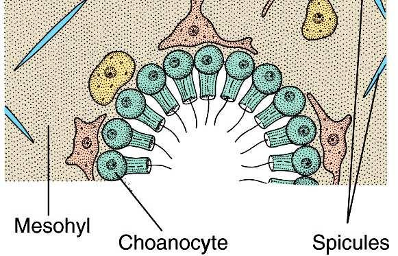3) They can differentiate into any other type of cell.