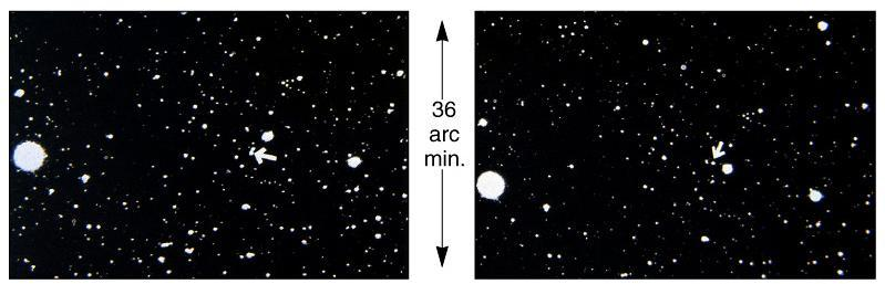 Stellar Proper Motion: Barnard s Star Two pictures, taken 22 years apart ( Taken at the same time of the year so it doesn t show parallax!). Barnard s star is a red dwarf of magnitude +9.