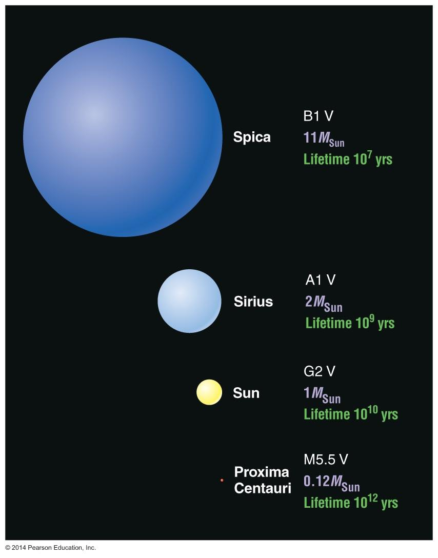Main-Sequence Star Summary High-Mass Star: High luminosity Short-lived