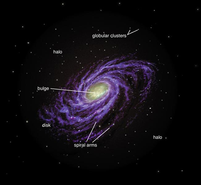 Top View of the Milky Way The MW is a spiral galaxy, or a late type galaxy.