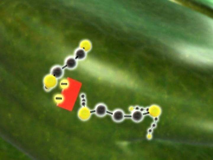 NADPH The resulting molecules go through a series of