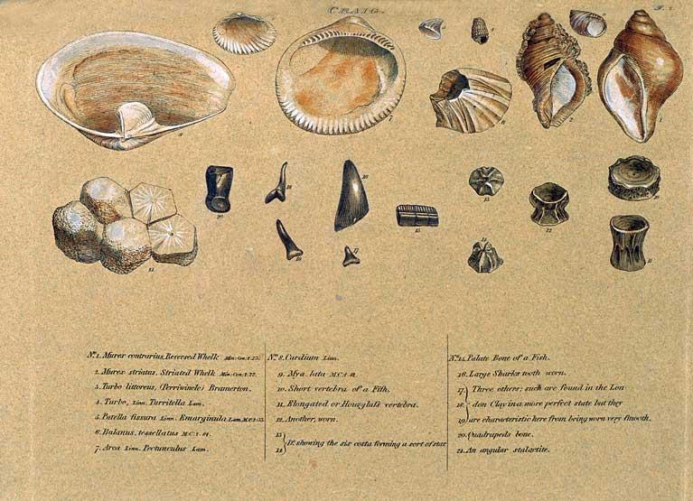 importance of fossils in