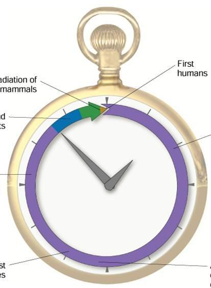 Geologic Time Scale Clock Model of Earth s History First land plants Radiation of mammals First humans First prokaryotes First