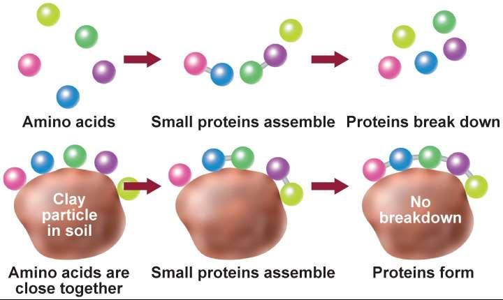 14.2 The Origin of Life Making Proteins Life requires proteins.