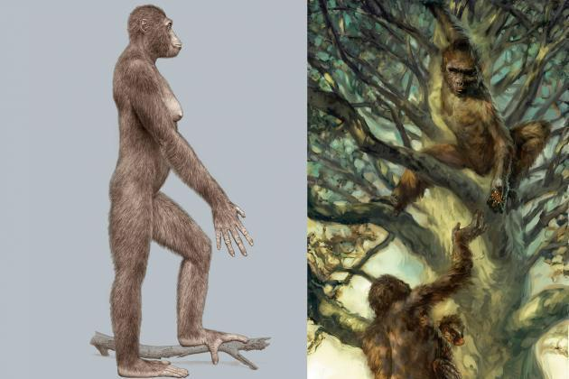 4 mya; East Africa -bipedal with