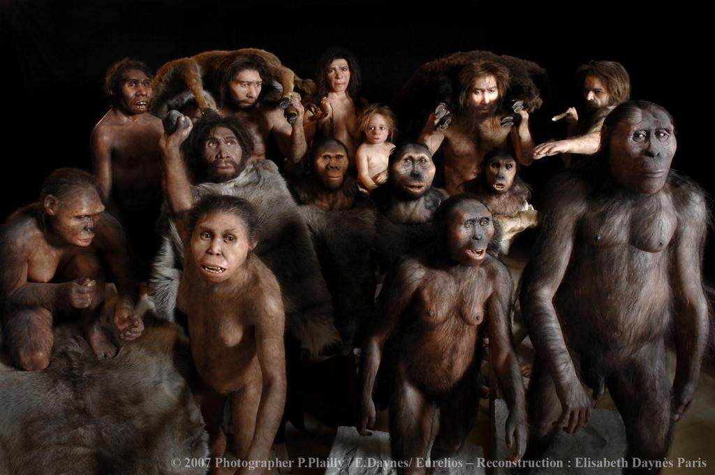 Hominins ~7-6 mya split from chimpanzees and bonobos -emerged and stayed in Africa until later Homo