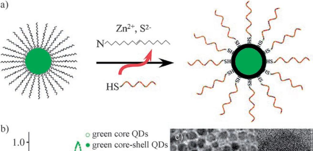 Direct capping of QDs with thiolated DNA oligonucleotides Figure 1. a) One-step in situ DNA functionalization of CdSe@ZnS core shell QDs.