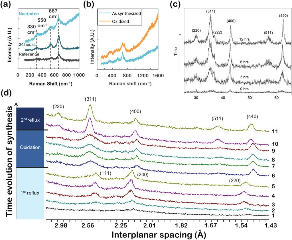 Fig. 6 (a) Raman spectroscopy of iron oxide nanoparticles synthesized from iron(iii) oleate and characterized at nucleation and after 24 hours of aging.