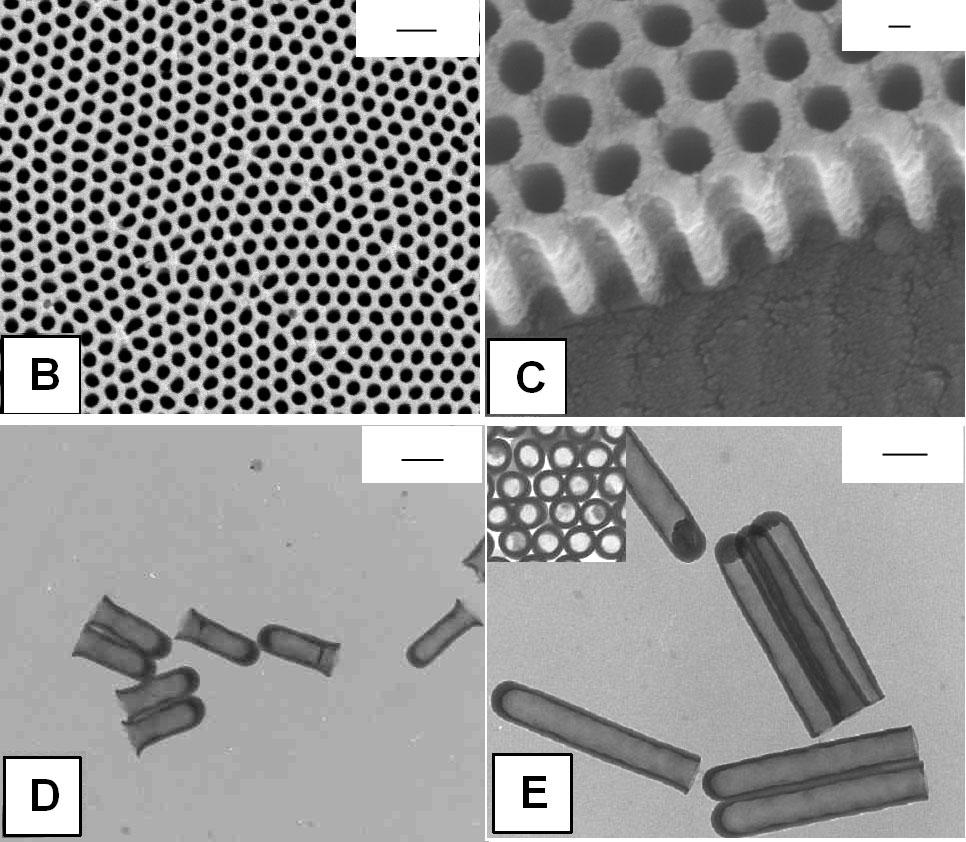 d). The dimensions of the nanotubes can be controlled by the pore diameter and thickness of the template [38, 81]. a b c d Figure 5.