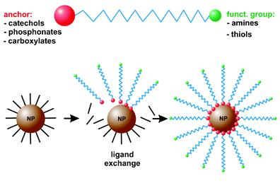 Figure 2.5 Ligand exchange for the surface modification of iron oxide nanoparticles with a hydrophilic polymer.