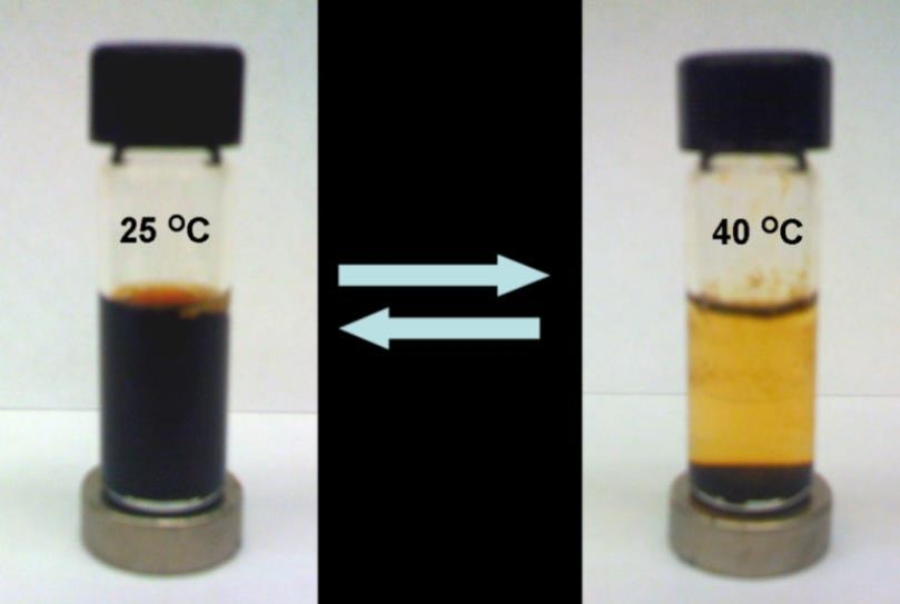 temperature and sonicating. This experiment provided further confirmatory evidence that the thermoresponsive nature of the PNIPAM shell triggered aggregation of the nanoparticles. Figure 3.