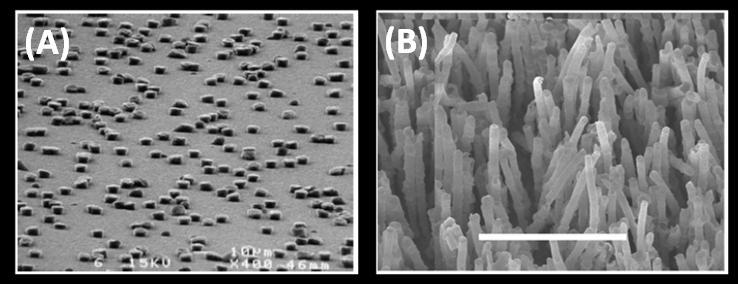 Figure 3-13: Nanopillars casted from AFM pierced waxy master-mold from[65] (A), polyethylene and propylene micropillars fabricated from membrane casting[66 70] (B).