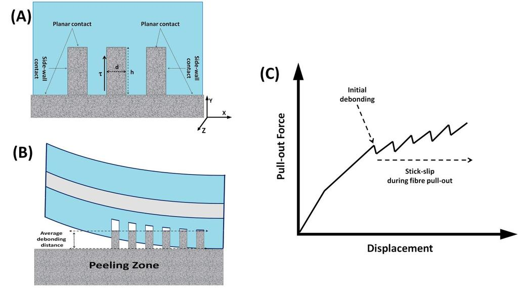 Figure 6-11: Schematic illustration of the peeling zone.