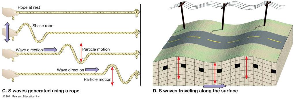S-Waves Secondary or Shear Wave S-waves are shear waves so they do not travel through fluids.