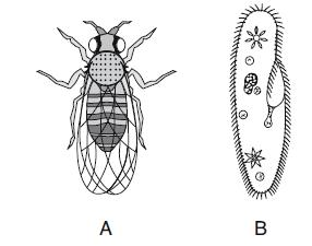15. A land-dwelling organism, A, and an aquatic single-celled organism, B, are represented below. Which statement best explains how A and B are able to survive in their environments?