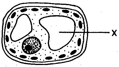 59. In the diagram of a cell below, the structure labeled X enables the cell to 60.