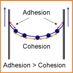 and adhesion together.