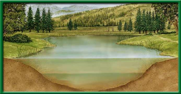 Freshwater biomes Another abiotic factor that limits life in deep lakes is light.