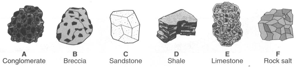 9 and 10 on the drawings of six sedimentary rocks labeled A through F.