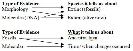 3 Figure 3: Darwin s Tree of Life diagram (from the Origin of the Species) The Tree of Life In the past, species were viewed as fixed discrete categories of beings, and were permanent and